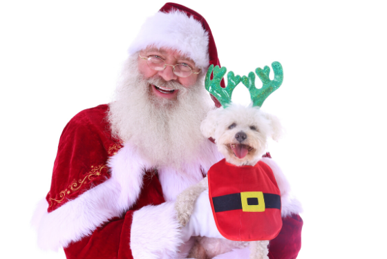 Photo of Santa with a dog in a holiday outfit
