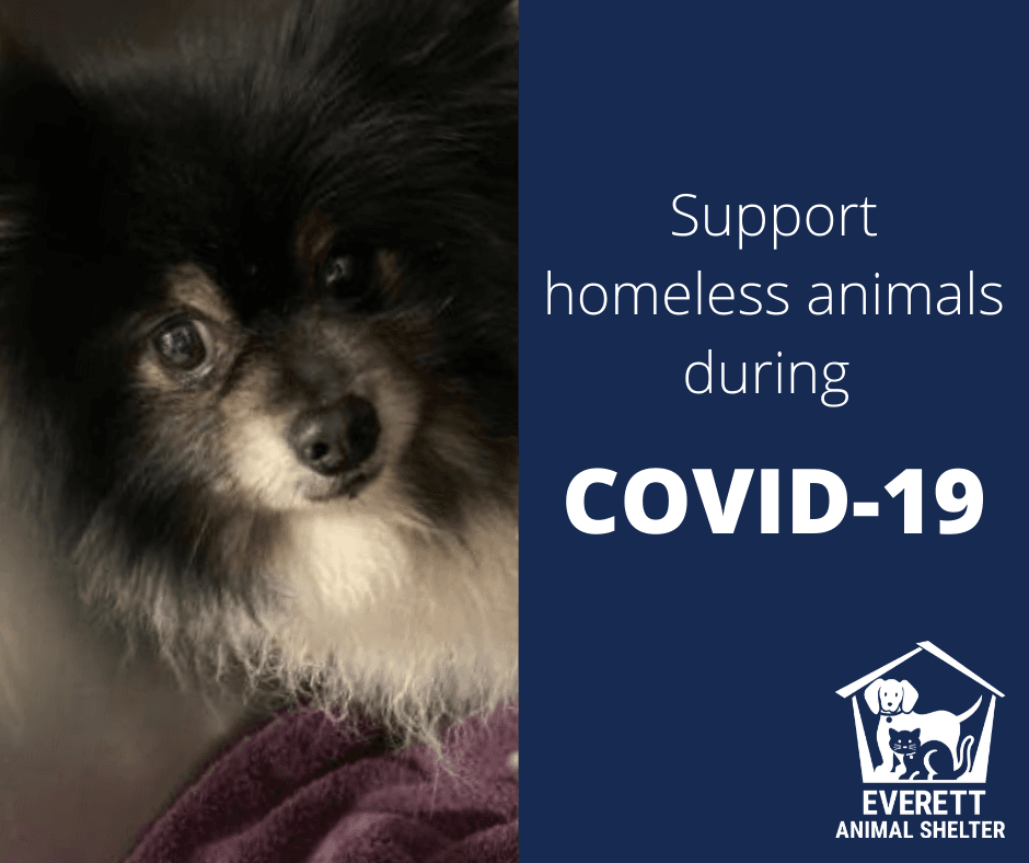 Support homeless animals during COVID-19