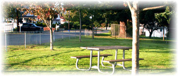 Park table sits on green grass